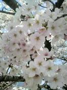 三枝夕夏 IN db 公式ブログ/☆京都☆ 画像2