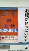 三枝夕夏 IN db 公式ブログ/☆ですが…☆ 画像3