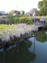 新垣直人 公式ブログ/藤祭り 画像1