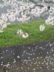 新垣直人 公式ブログ/千鳥ヶ淵の桜 画像2