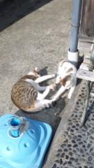 新垣直人 公式ブログ/絵から飛び出したネコ? 画像3