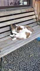 新垣直人 公式ブログ/絵から飛び出したネコ? 画像2