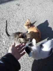 新垣直人 公式ブログ/初ツーリングで山梨県へ 〜ぶどう畑の子猫〜 画像2