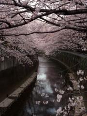 新垣直人 公式ブログ/桜の季節 画像1