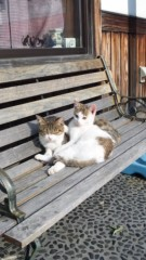 新垣直人 公式ブログ/絵から飛び出したネコ? 画像1
