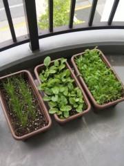 新垣直人 公式ブログ/家庭菜園 画像2