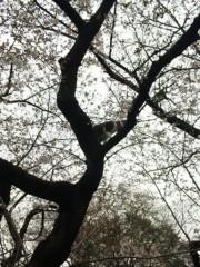 新垣直人 公式ブログ/桜の木に… 画像1