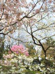 新垣直人 公式ブログ/バイクでぶらり春の路 〜ポン。フワ。〜 画像1