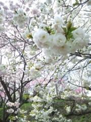 新垣直人 公式ブログ/バイクでぶらり春の路 〜ポン。フワ。〜 画像2