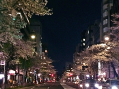 新垣直人 公式ブログ/桜の時 画像2