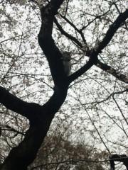 新垣直人 公式ブログ/桜の木に… 画像2