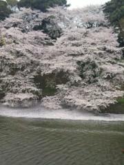 新垣直人 公式ブログ/千鳥ヶ淵の桜 画像3