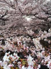 新垣直人 公式ブログ/桜の巣 画像1
