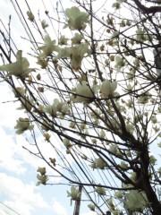 新垣直人 公式ブログ/春のうららの♪ 画像3