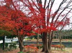 新垣直人 公式ブログ/これもクリスマスカラー? 画像2