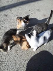 新垣直人 公式ブログ/初ツーリングで山梨県へ 〜ぶどう畑の子猫〜 画像1