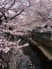 新垣直人 公式ブログ/桜の季節 画像2