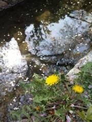 新垣直人 公式ブログ/春の回想 〜哲学の道〜 画像2