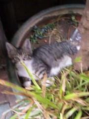 新垣直人 公式ブログ/都会の子猫 画像3