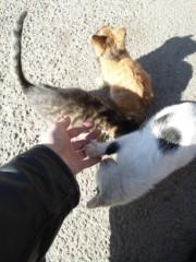 新垣直人 公式ブログ/初ツーリングで山梨県へ 〜ぶどう畑の子猫〜 画像3