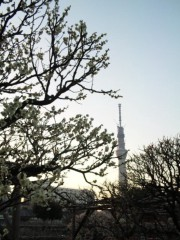 新垣直人 公式ブログ/震災から1週間 画像2