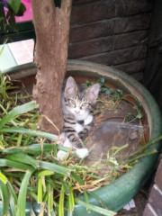 新垣直人 公式ブログ/都会の子猫 画像2
