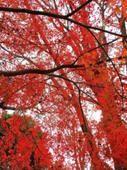 新垣直人 公式ブログ/これもクリスマスカラー? 画像3