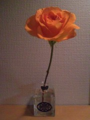 伊藤えみ 公式ブログ/俺ん家のバラ 画像1