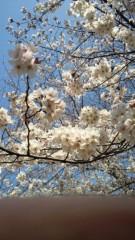 川田妙子 公式ブログ/桜… 画像1