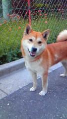 川田妙子 公式ブログ/愛犬チャチャ新盆 画像2