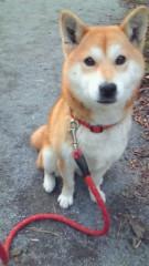 川田妙子 公式ブログ/愛犬チャチャ新盆 画像1