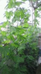 川田妙子 公式ブログ/グリーンカーテン 画像1