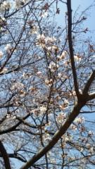 川田妙子 公式ブログ/桜… 画像2