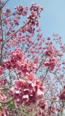川田妙子 公式ブログ/春ですね 画像2