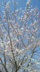 川田妙子 公式ブログ/春ですね 画像1