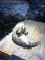 佐藤未帆 (しながわてれび出演ブログ) 公式ブログ/海遊館 ペンギン 画像2