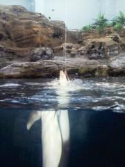 佐藤未帆 (しながわてれび出演ブログ) 公式ブログ/海遊館 イルカ (カマイルカ) 画像3