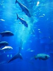 佐藤未帆 (しながわてれび出演ブログ) 公式ブログ/海遊館の 画像1
