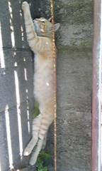 佐藤未帆 (しながわてれび出演ブログ) 公式ブログ/伊豆の猫ちゃん 画像1