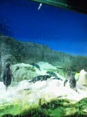 佐藤未帆 (しながわてれび出演ブログ) 公式ブログ/海遊館 ペンギン 画像1