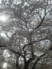 佐藤未帆 (しながわてれび出演ブログ) 公式ブログ/桜 さくら サクラ 画像2