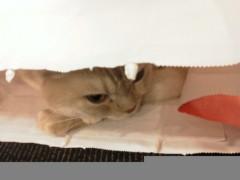 佐藤未帆 (しながわてれび出演ブログ) 公式ブログ/猫猫 画像1