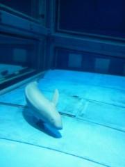 佐藤未帆 (しながわてれび出演ブログ) 公式ブログ/海遊館 スナメリ 画像3