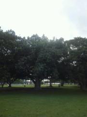 佐藤未帆 (しながわてれび出演ブログ) 公式ブログ/ハワイ 神秘的な木々 画像3
