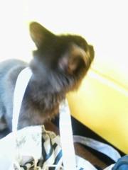 佐藤未帆 (しながわてれび出演ブログ) 公式ブログ/猫ぱんち 画像1