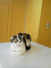 佐藤未帆 (しながわてれび出演ブログ) 公式ブログ/猫 画像3
