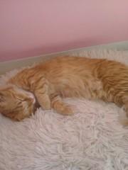 佐藤未帆 (しながわてれび出演ブログ) 公式ブログ/猫カフェ 画像2
