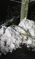 佐藤未帆 (しながわてれび出演ブログ) 公式ブログ/赤坂の雪 画像1