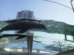 佐藤未帆 (しながわてれび出演ブログ) 公式ブログ/サンシャインシティ水族館 画像2