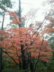 佐藤未帆 (しながわてれび出演ブログ) 公式ブログ/京都 金閣寺 画像2